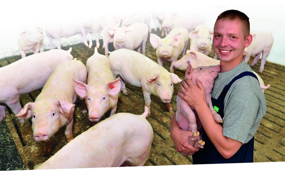 Grüne Berufe Schweinebauer
